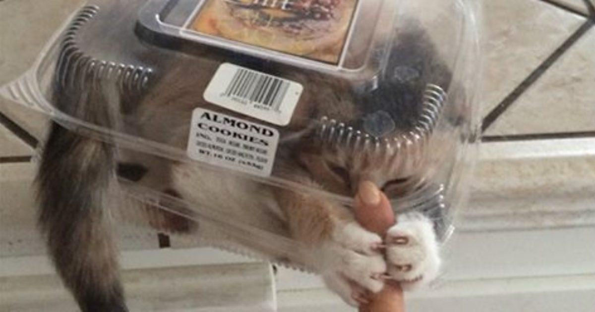 Продлевая жизнь: на этих котов невозможно смотреть без смеха!