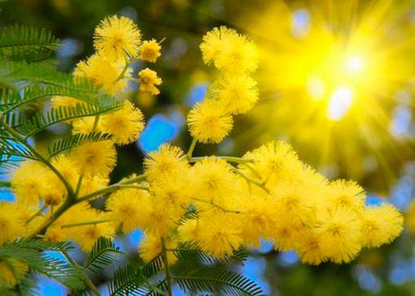 Какой цветок соответствует Вашему имени? Прямо в точку!