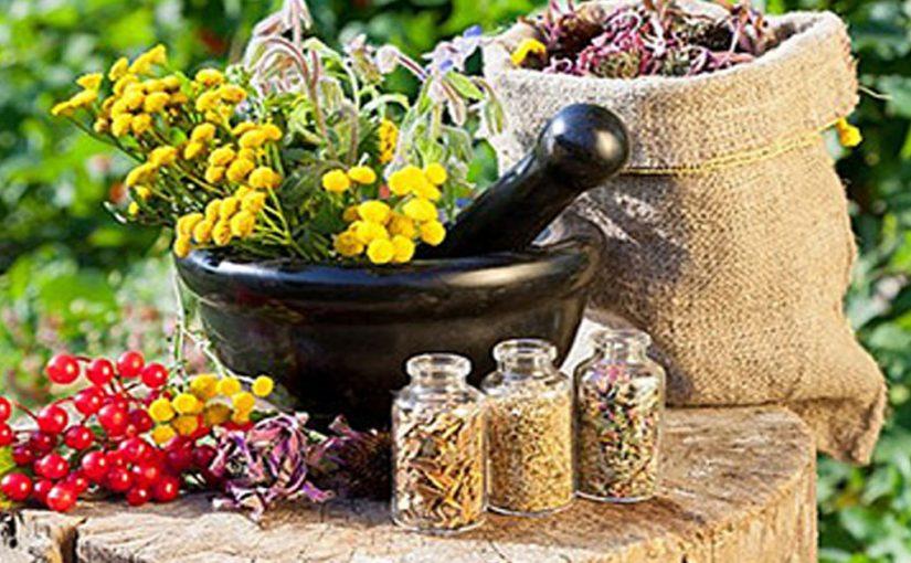 Народная медицина: ТОП три растения, которые обладают целебными свойствами