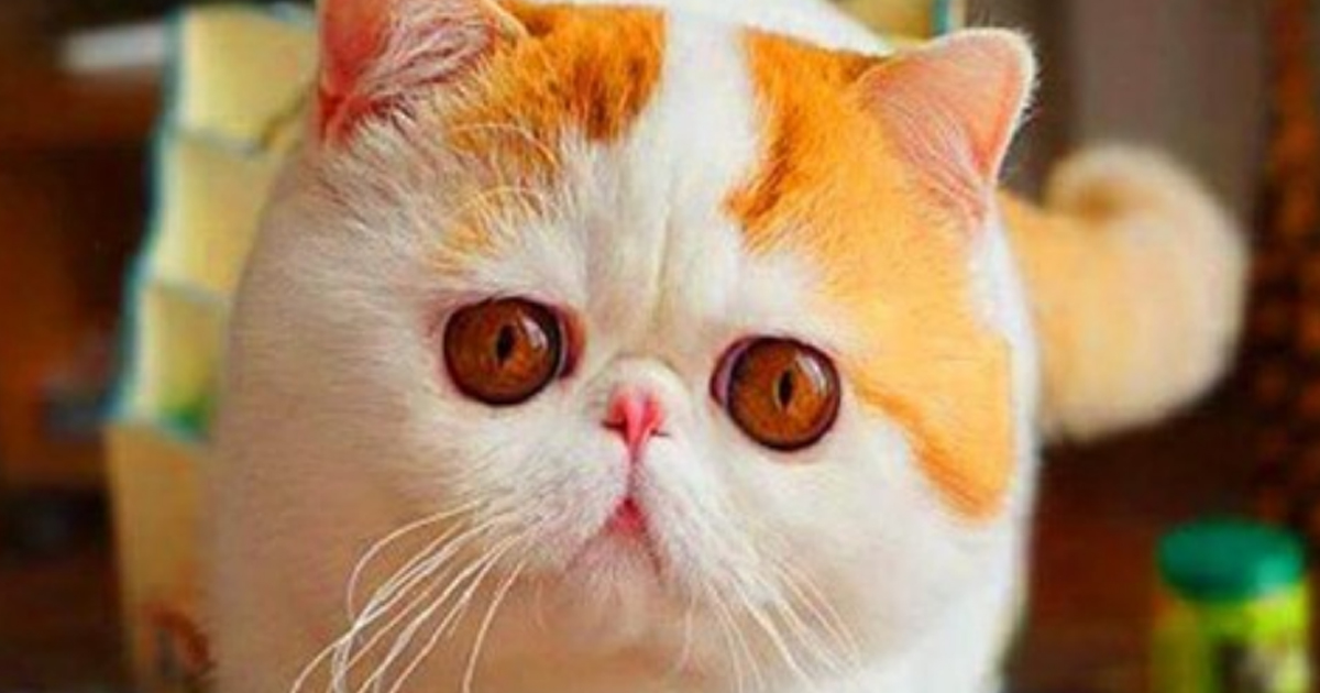 Красавицы-кошки во всей своей красе. Хотели бы какую-нибудь из них себе?