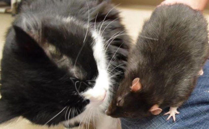 В это невозможно поверить, но кот, собака и крыса стали неразлучными друзьями