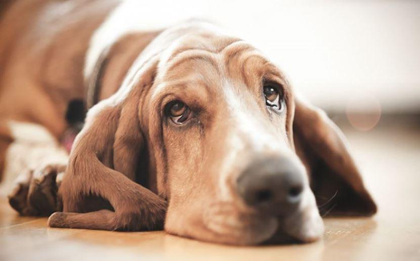 Ваш Знак Зодиака Расскажет, На Собак Какой Породы Вы Больше Всего Похожи