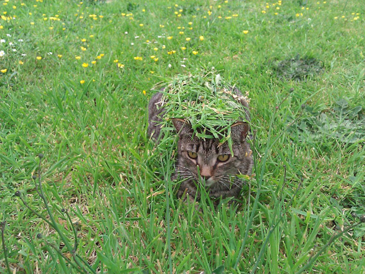 20 фото котов, которые следят за нами из укрытия