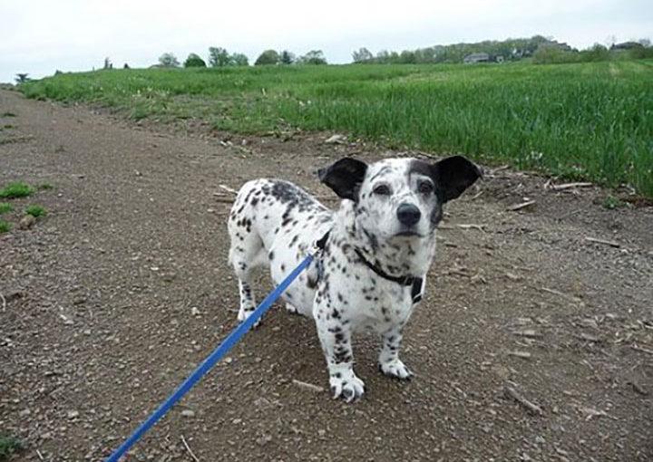 20 Уникальных Пород Собак, Которыми Хочется Любоваться Бесконечно