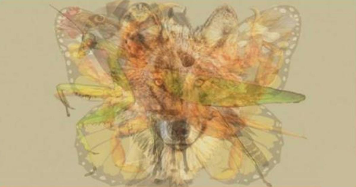 Первое животное, которое вы видите на этой картине, многое говорит о вашей личности