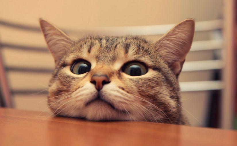 15 примеров того, как выглядит настоящее кошачье любопытство