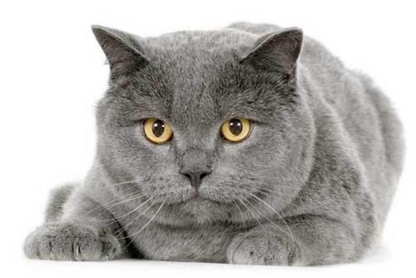 А вы знаете сколько лет вашей кошке по человеческим меркам?