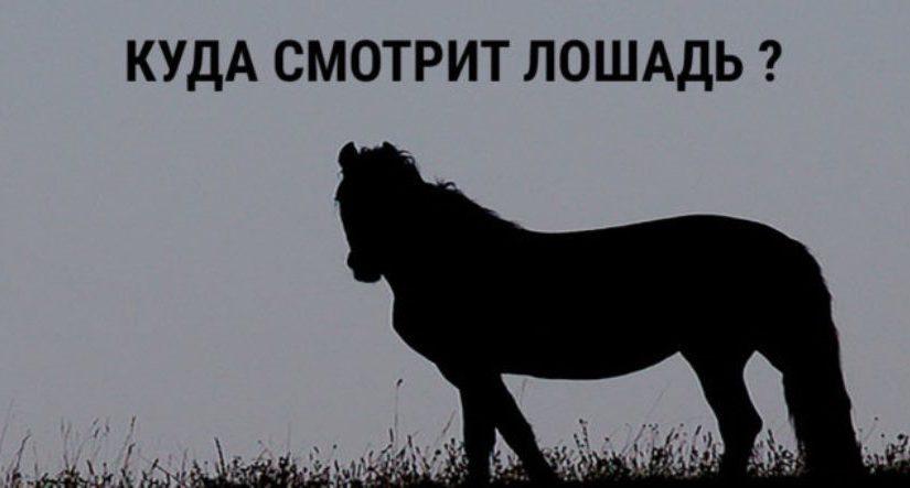 Тест на тип личности. Выберите направление, куда смотрит лошадь и читайте результат!