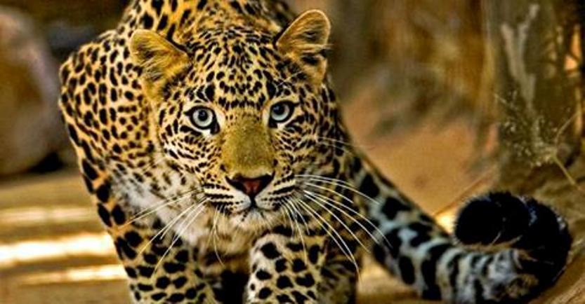 Топ-10 самых быстрых животных в мире