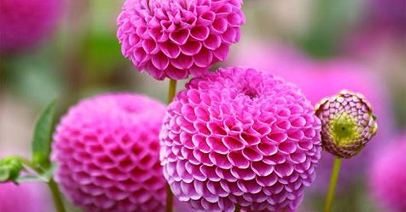 10 самых потрясающих цветов на планете