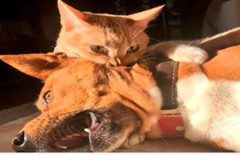 15 животных, которые покорят вас своим зверским обаянием