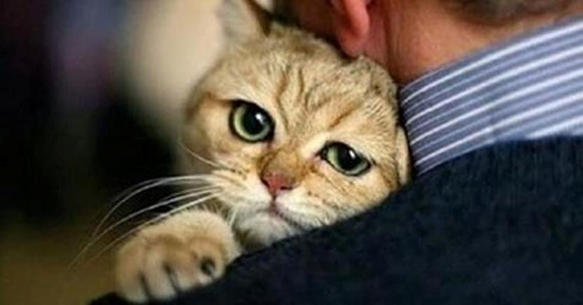 «Кота заводят, чтобы…»: стихотворение-посвящение всем котам и их хозяевам