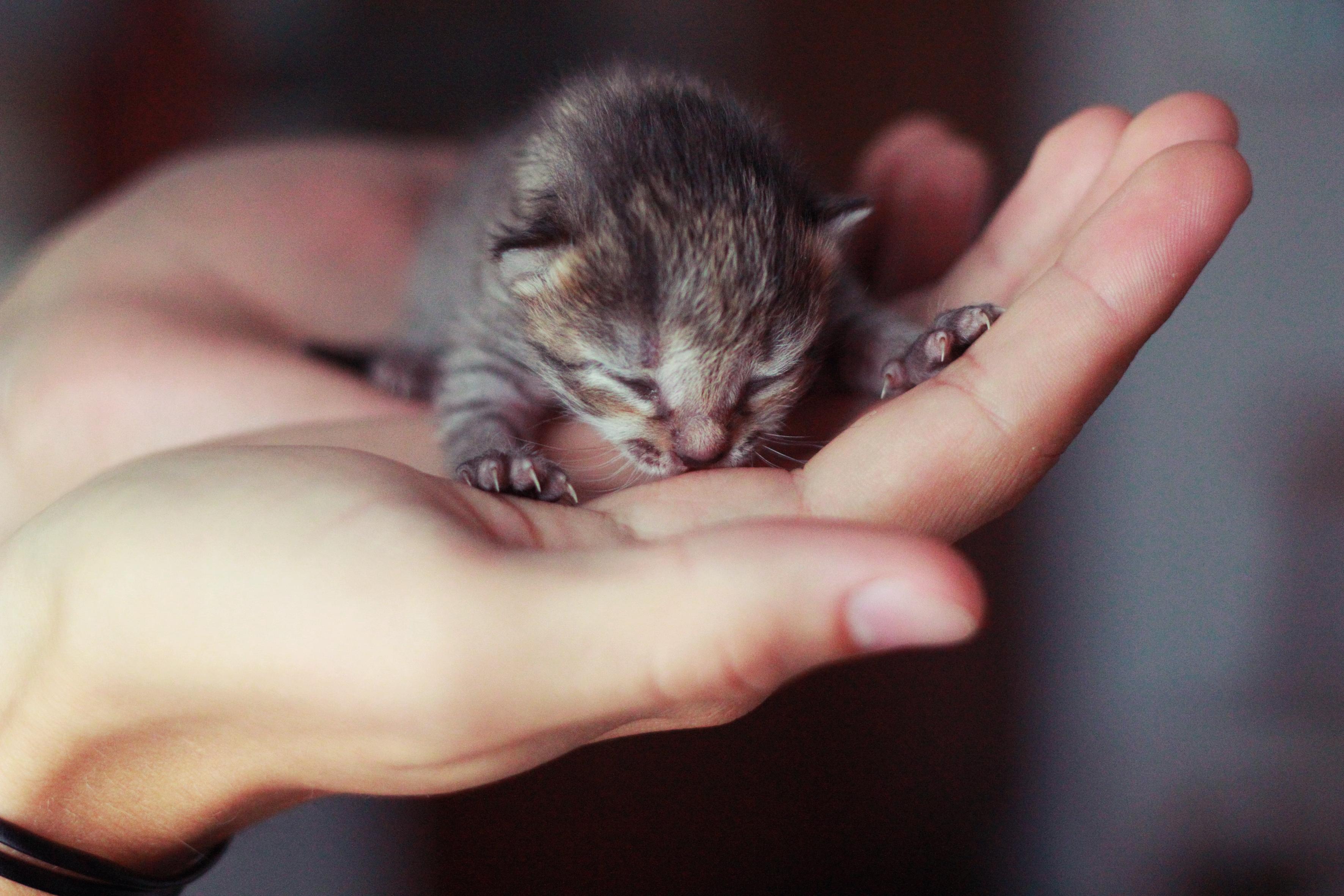17 трогательных фото котеек до и после того, как они обрели свой дом