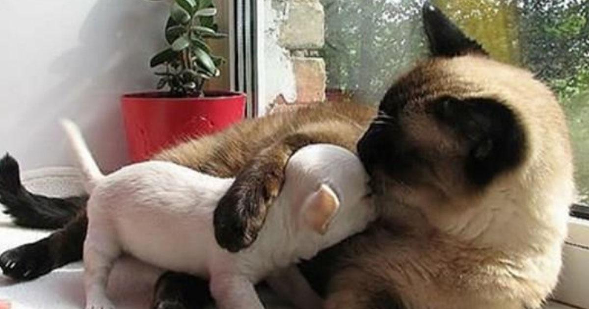 19 фотографий  необычной дружбы животного мира