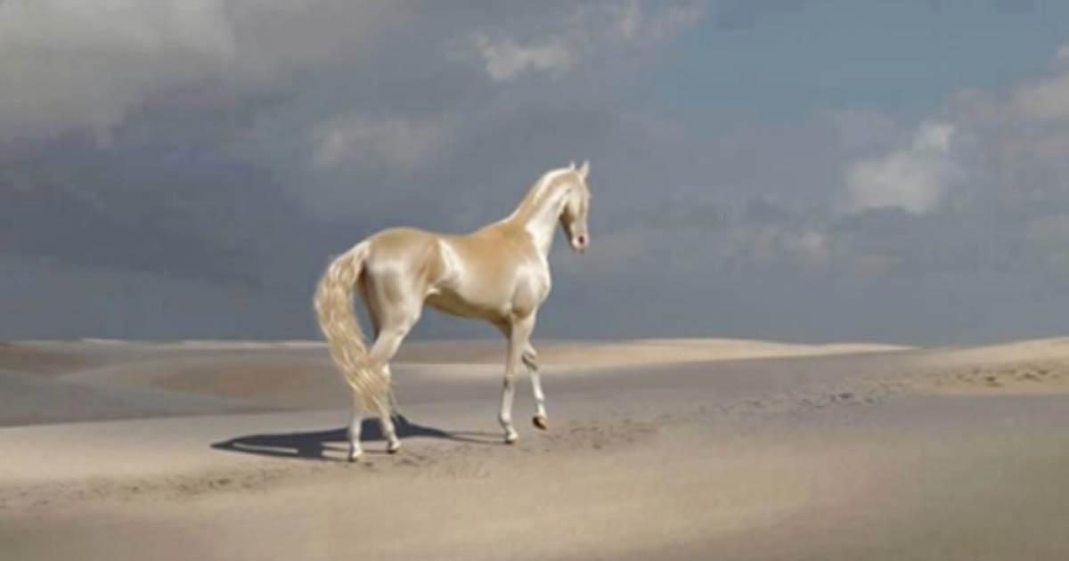 Именно так выглядит самая красивая лошадь в мире