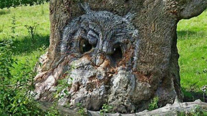 25 деревьев, которые выглядят словно сказочные персонажи!