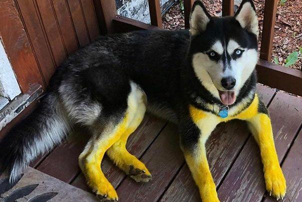 20 собак, которые попали в неловкие ситуации, но, кажется, об этом не жалеют