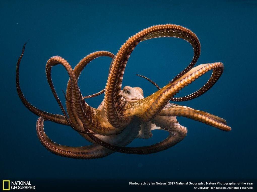 30 фотографии, которые журнал National Geographic назвал лучшими снимками дикой природы прошлого года