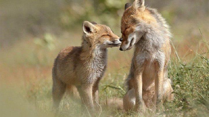 Любви все существа покорны (10 фото)
