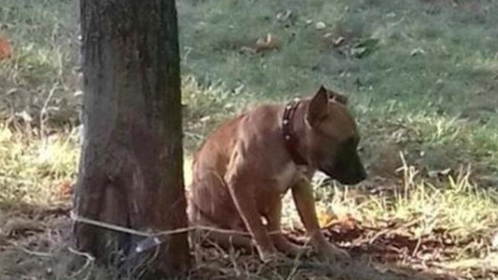 История о брошенной в парке собаке.