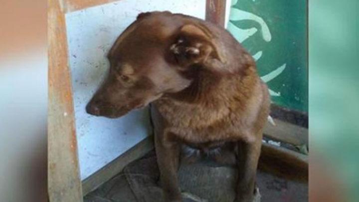 История о собаке которая всё же дождалась своего хозяина.
