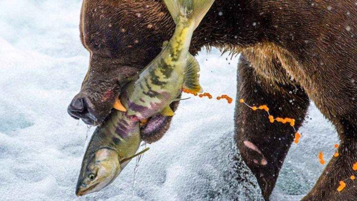 35 удивительных фото от National Geographic
