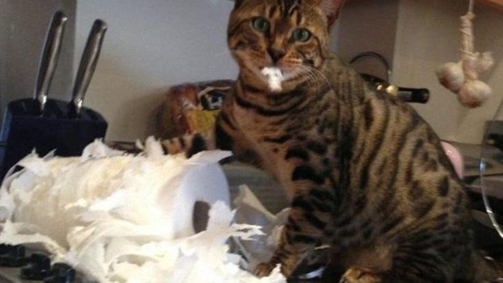 13 шкодливых котов и их приключения — уморительная фотоподборка
