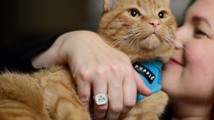 Веские причины завести кота