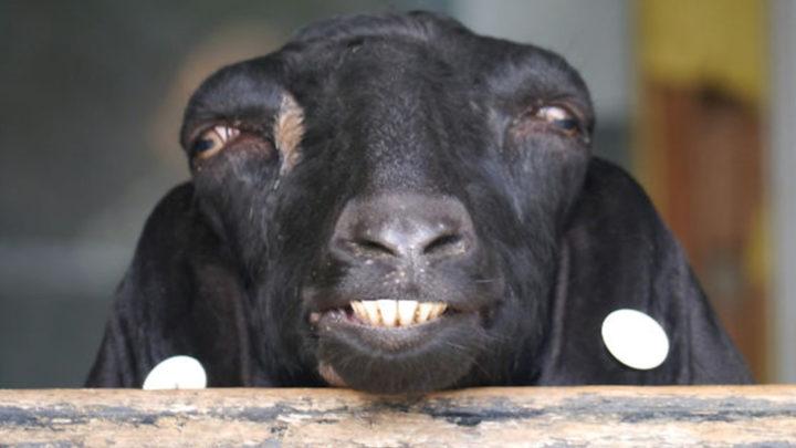 Смешные фото не очень фотогеничных животных