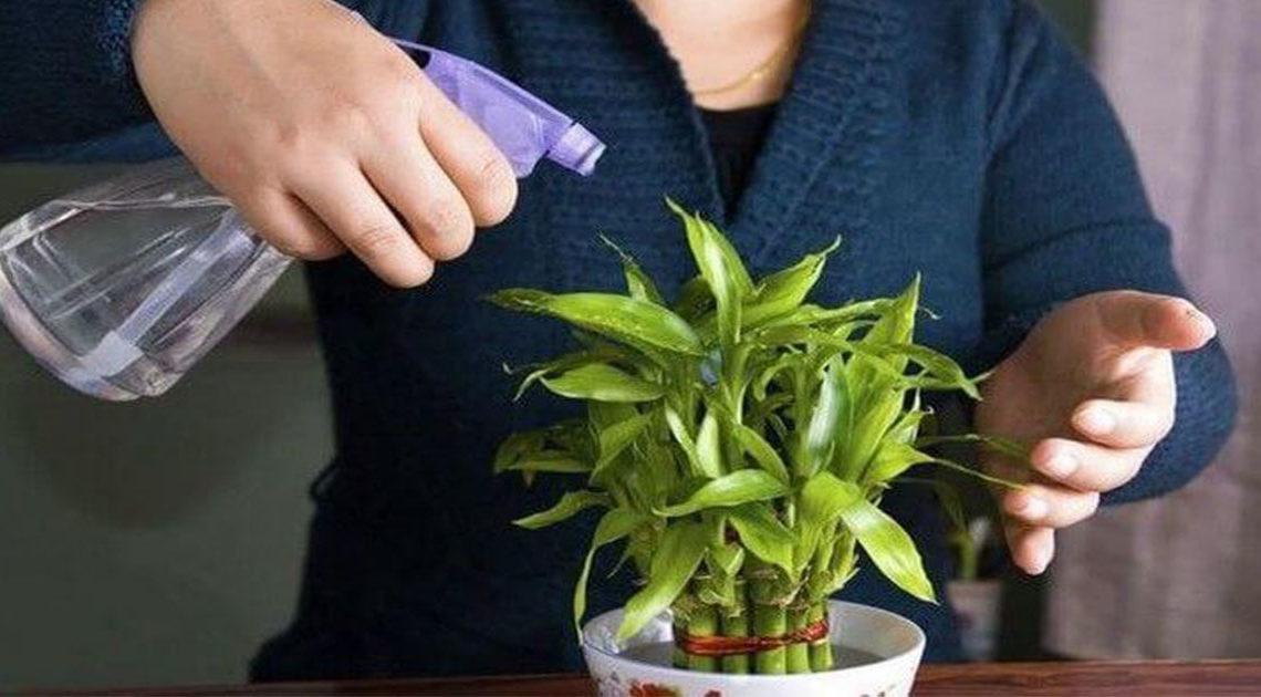 Что нужно делать, когда уезжаешь и некому полить цветы дома