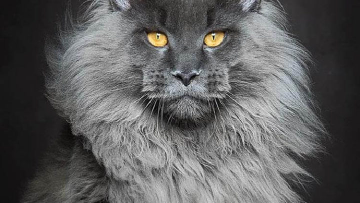 20 фото котов потрясающей красоты