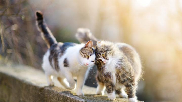 Средняя продолжительность жизни разных пород кошек и собак