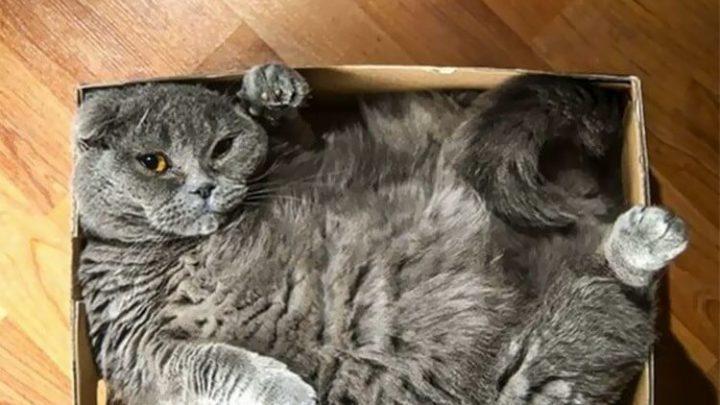 Я — кот, мне так удобно: 30 котов в самых неожиданных местах (31 фото)
