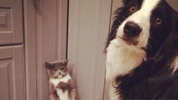 Уморительные моменты из совместной жизни собак и кошек (19 фото)