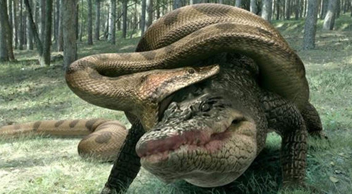 Видео: Битвы титанов — анаконда против крокодила