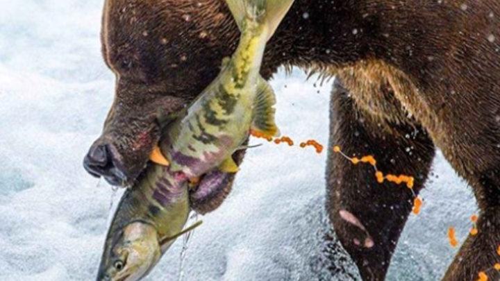 Лучшие снимки из конкурса «Лучшая фотография природы» от National Geographic.