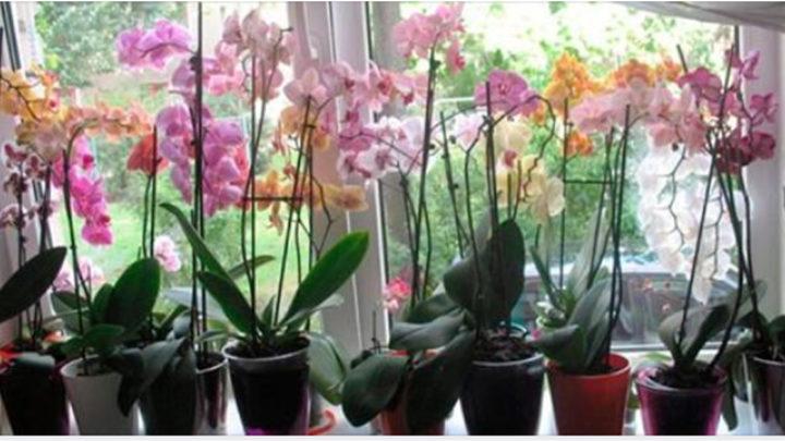 7 секретов для ухода за орхидеями