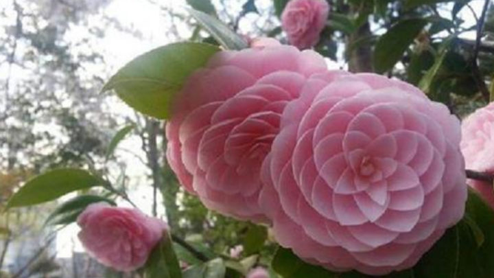 26 необычайно красивых цветов