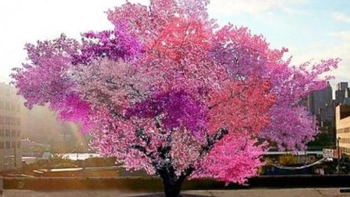 Фантастическое дерево-гибрид, на котором растет 40 видов фруктов