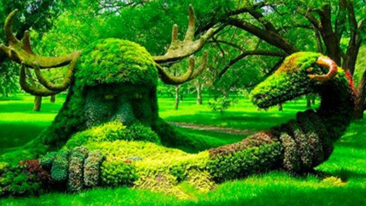 В руках этих садовников деревья и кустарники превращаются в настоящую сказу.