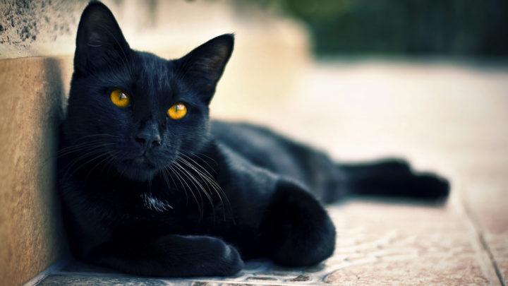 5 фактов о том, что кошки продлевают человеку жизнь