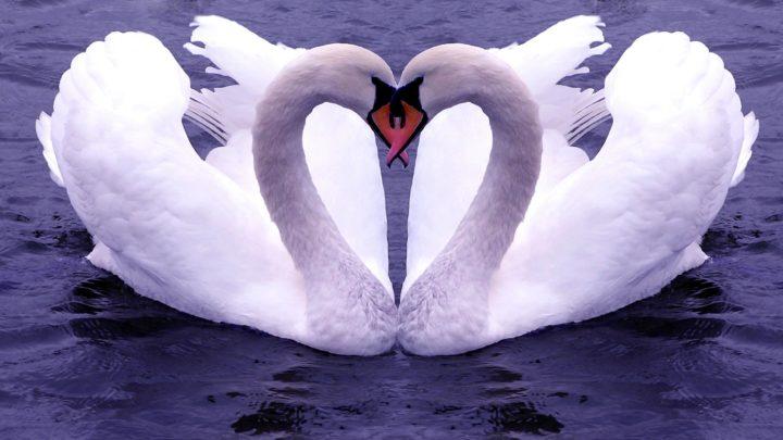 10 животных и птиц, которые остаются верны друг другу всю жизнь