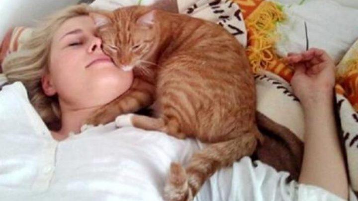Почему кот спит на человеке: что означают его позы и выбpанное место