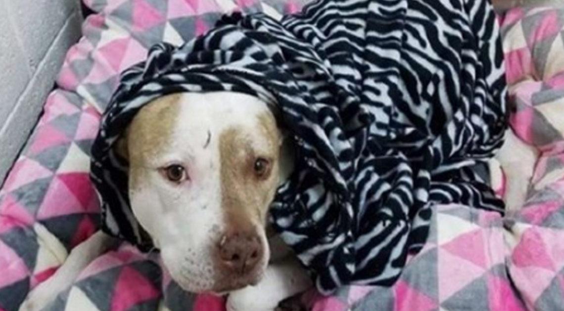 Из жизни: люди отдали подаренную собачку в приют