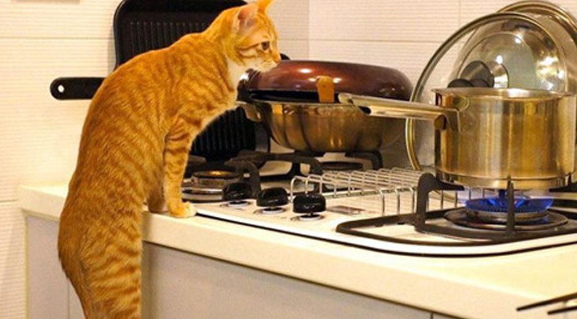 22 способа использования котов в хозяйстве